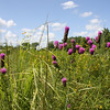 Purple prairie clover appears in the foreground of this roadside image taken in Jones County. This eastern Iowa county plants TA-funded native seed in its rights-of way.<br /> <br /> Iowa's Integrated Roadside Vegetation Management (IRVM) Program Office has been awarded FHWA funding to purchase native prairie seed for use in county rights-of-way since 1998. Approximately 1000 roadside acres have been planted each year. These plantings are well-adapted for use on roadsides, providing weed and erosion control, storm water management, and habitat corridors. The IRVM Program Office is located at the University of Northern Iowa's Tallgrass Prairie Center.