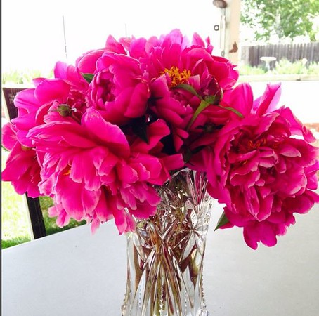 Peonies from the backyard