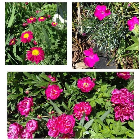 Backyard flowers!