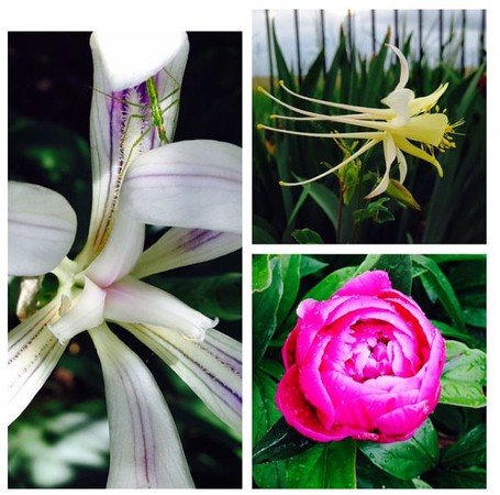 Lovely yard flowers - all you need to do is water them!