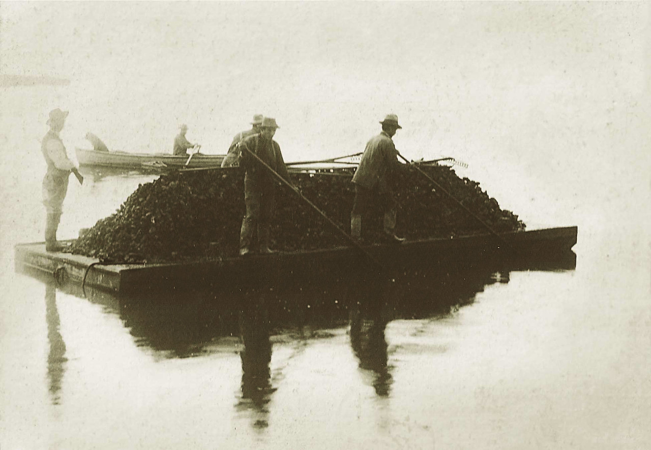 Then: The area including what is now Martin Luther King Jr. Regional Shoreline in Oakland has a Wild West history. The park is on San Leandro Bay, which was the scene of extensive oyster farming in the 1880s and '90s. This photo shows oyster workers harvesting the shellfish under the protection of an armed guard, to protect them from oyster pirates. By 1890 the oyster farms had closed due to bay pollution and silting.