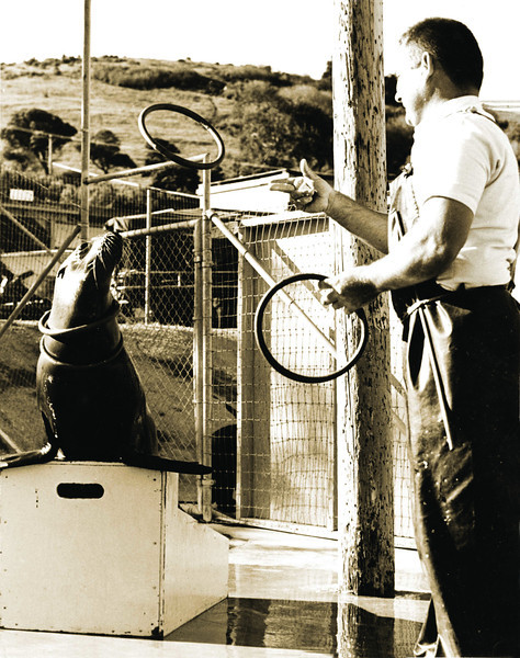 Then: A unique activity at today's Coyote Hills Regional Park in the 1960s – the Stanford Research Institute's Biological Sonar Laboratory. Here Dr. Thomas Pouleter studied marine mammals.