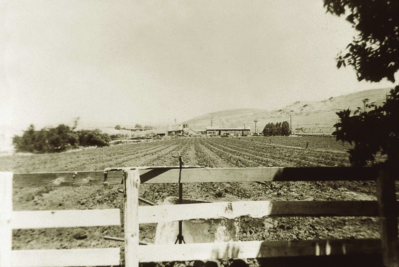 Then: This 1959 photo shows Marchios family ranch land that later became Contra Loma Reservoir in Antioch. Contra Loma Reservoir was constructed in 1965. An agreement between the Contra Costa Water District and EBRPD allowed the Park District to open the park to the public for recreation in 1968.