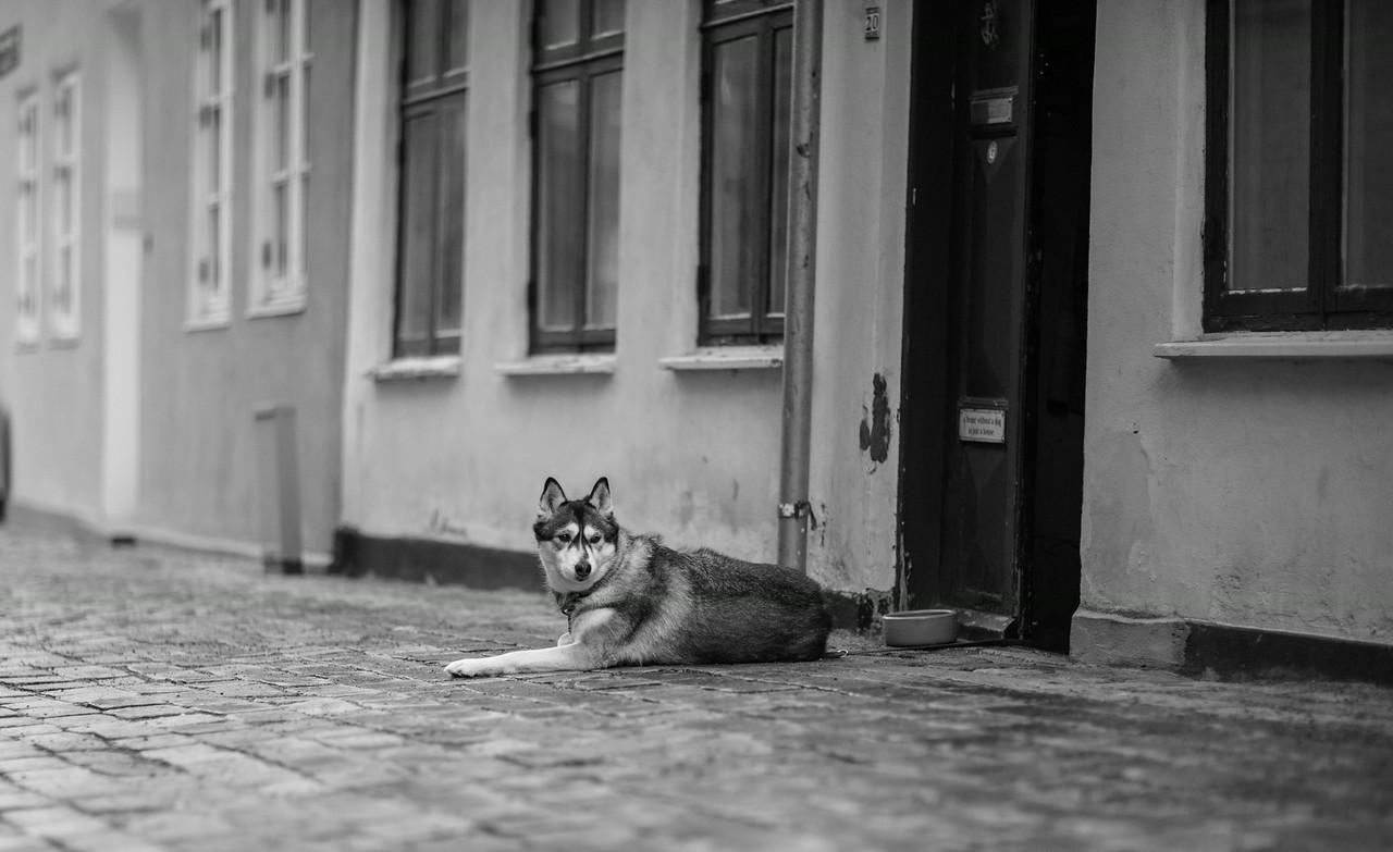 Et hundeliv