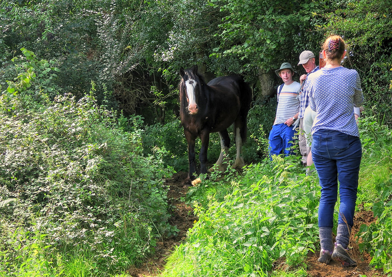 A lovely shire horse decides to join us for lunch
