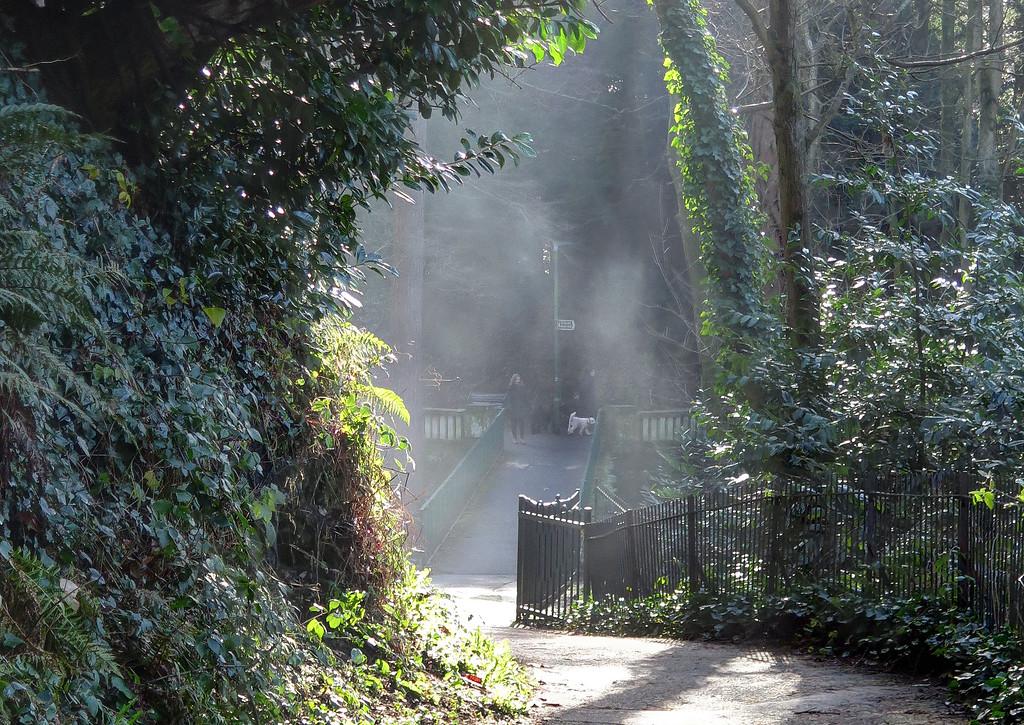 Morning mist dances in the sunshine