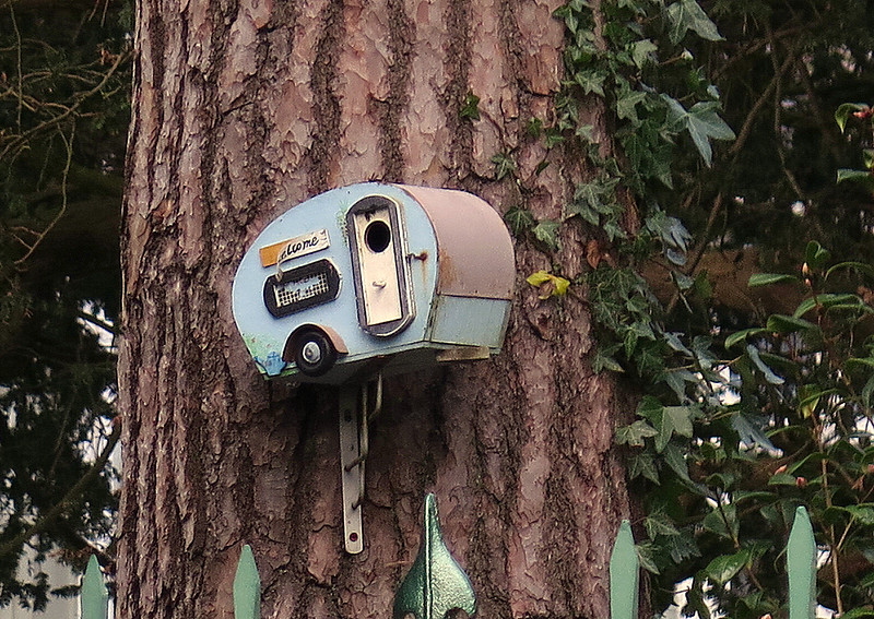 A novel bird nesting box on a tree in Branksome Park