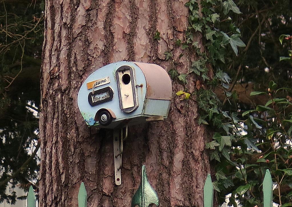 A novel bird nesting box on a tree in Branksome Park