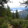 Lolo Trail view