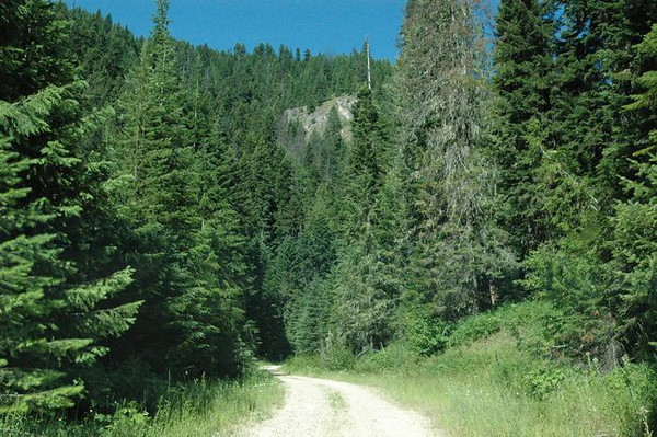 The Lolo Motoring Highway is today a single lane forest road.  During the Expedition's travels the trail was no more than an animal trail used man and animals for migrating from the east to west over the Bitterroot mountains.