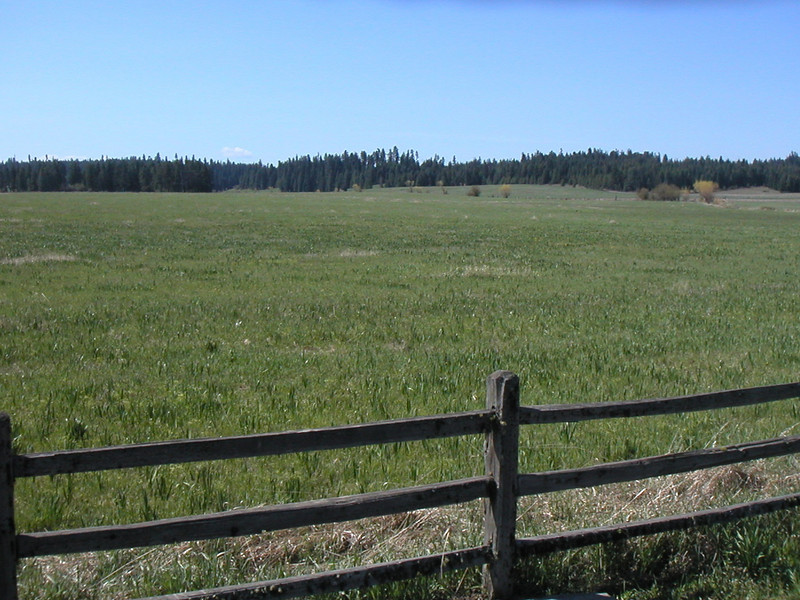 Clark and his crew exited the woods in the far distance into this field of (at the time) waste high grass to see the two Nez Perce Indian teens hiding in the tall grass.