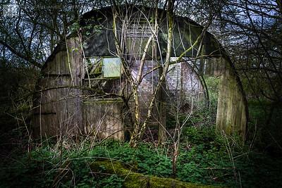 Nissen hut in the undergrowth