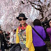 Akita Port Of Call - Kakunodate Cherry Blossom Festival April 25th, 2017