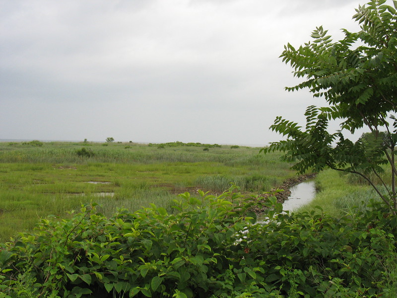 """""""Project restored tidal wetlands at fletchers creek in the Fletchers Creek Wetland Restoration, Millford, Connecticut. [Silver Sands State Park] Minor drainage improvements which involved the retrofitting of culverts and tide gates to allow for additional tidal flow to enter the salt marshes within Fletchers Creek to help restore the marshes which had been degraded from the construction of a now abandoned service road and a trolley line."""" p.54, FHWA Guidance on Transportation Enhancements"""
