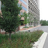 Photo Credit: Dan Christian<br /> <br /> Lansing, MI is located in the Grand River watershed which flows into Lake Michigan. To deal with the number one source of water pollution in the United States, a category 5 Transportation Enhancement grant helped to redefine the streetscape along Michigan Avenue. 20 rain gardens or bioretention areas were installed along a four block section of the street to help reduce polluted stormwater runoff. <br /> <br />         $2 million in Federal funding was acquired in 2006 for the project. A $500,000 local match in addition to a Michigan Department of Environmental Quality Clean Michigan Initiative Grant and an Environmental Protection Agency Non-Point Source Grant also funded the project. The project included the construction of rain gardens and the addition of lighting. <br /> <br />         The rain gardens filter and keep harmful pollutants such as fertilizer, pesticides, trash, and pet waste out of storm drains. The runoff and any over flow is diverted away from storm drains and into gardens where strong and deep root systems filter out pollutants before the water enters the storm drain clean. In addition to the benefit of increased water quality, rain gardens help create a pedestrian friendly and attractive streetscapes.
