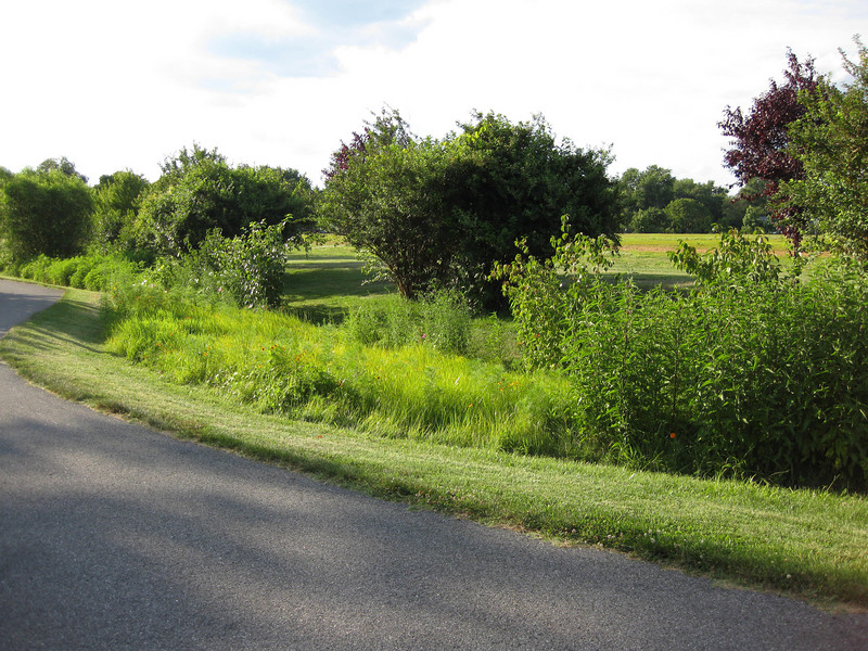 "Biorention swales along Cedar Park Road line the walking trail. In addition to receiving runoff from 18 acres of stadium/commuter parking area and Cedar Park Road itself, the swales provide a visual amenity to users of the walking trail. The wild flowers and native grasses flourishing in the swales echo with the songs of crickets, which in turn attract finches and other songbirds.<br /> <br /> The Navy-Marine Corps Memorial Stadium mitigation project of 2002 embodies the holistic approach and visionary potential of Transportation Enhancements to build infrastructure that is integrated with the environment, promotes health, and provides visual amenities. The project combines a 1.25 mile multi-use trail with a series of stormwater best management practices (BMPs) as landscaping. The stadium area serves both as an athletic facility and a park-and-ride location. Now, thanks to a $590,665 TE grant and an even more substantial local match, the stadium parcel is also used on a daily basis by many walkers and cyclists. The project demonstrates an ""ecosystem approach"" to infrastructure, where one element of the system is seamlessly interconnected with others, and performs multiple functions: preventing flooding, protecting water quality, fighting obesity, providing habitat, and serving the needs of outdoor recreation users.  Such infrastructure is characterized both by its efficiency and its livability."