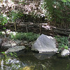 "Recycling found woody material to stabilize the bank puts a man-made structure in place only until the roots of new plant life and accumulated soil can stabilize the bank naturally.  This image is of Sycamore Creek.<br /> <br /> The Montgomery County Department of Environmental Protection (DEP) received a $2 million TE grant in 2000 to construct channel restoration and habitat improvements in Rock Creek Park. In an effort to restore and protect the Rock Creek watershed, which ultimately drains to the Chesapeake Bay, this project added modern stormwater controls to 730 acres to the Turkey Branch Stream subwatershed (approx. 30% of the drainage area). The project including work along 12,000 feet of the Turkey Branch Stream, along 13,400 feet of the Sycamore Creek, and along Joseph's Branch Stream. The Rock Creek watershed drains approximately 60 square miles.<br /> <br /> You can learn more about the DEP's work in this watershed by visiting their website at: <a href=""http://www.montgomerycountymd.gov/deptmpl.asp?url=/content/dep/restoration/home.asp"">http://www.montgomerycountymd.gov/deptmpl.asp?url=/content/dep/restoration/home.asp</a>"