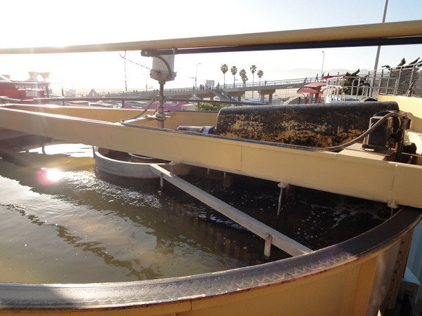 <b>The third stage in the water treatment process, Dissolved Air Floatation, causes fine bubbles to appear in the water. These bubbles bring free oil and grease to the surface of the water, where it can be skimmed off as shown in photo.</b>  The Santa Monica Urban Runoff Recycling Facility (SMURRF) treats and reuses dry-weather runoff from parts of western Los Angeles City and of central Santa Monica City before this source of pollution can reach Santa Monica Bay. Over 100 million gallons of urban runoff drain from Los Angeles County into the ocean on a typical dry weather day. This flow includes runoff from landscaping irrigation, car washes, hosing down of hardscapes, pool draining and other highly contaminated sources. It is the primary source of pollution into the bay, affecting beach users and aquatic life alike. SMURRF helps mitigate this pollution by treating up to 500,000 gallons daily and recycling the water for irrigation and indoor flushing purposes. In addition, the SMURRF blends technology, art, and education to create an international example of innovative urban ecological management.