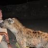 Hyaena Man / Der Hyänen Flüsterer
