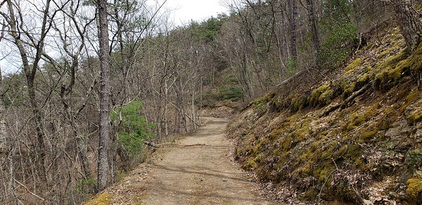 Typical road through the property