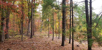 Wooded