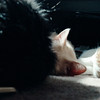 03-92 Shadow 01 02 Leo, Smudge