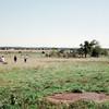 09-92 Battle Ground IN 01 Wolf Park