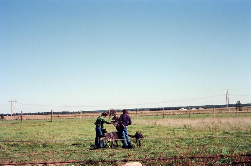 09-92 Battle Ground IN 03 Wolf Park