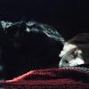 03-92 Shadow 01 Leo