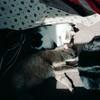 03-92 Leo 02 Smudge, Shadow