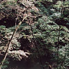 09-92 Clifton Gorge John Bryan 04