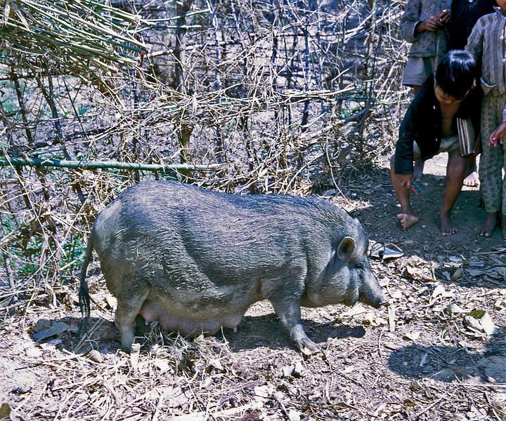 Sow at Na Thant