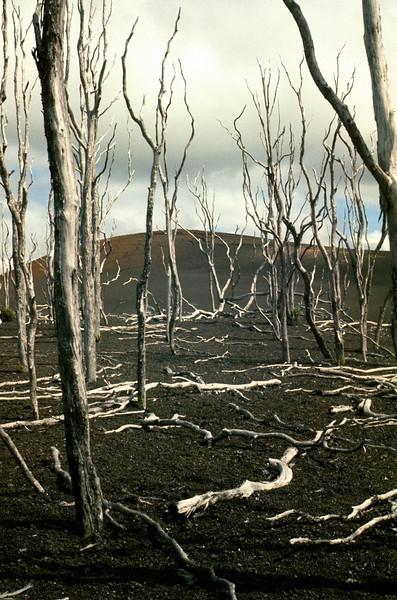 Dead Rainforest