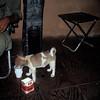 Aid Station Dog LZ Bronc0