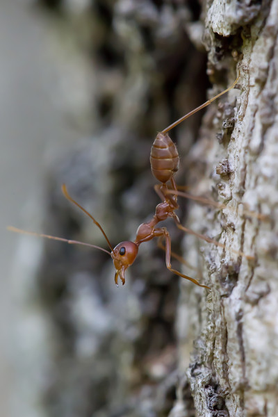 Ants like to pose while their pals bite huge chunks out of your toes.