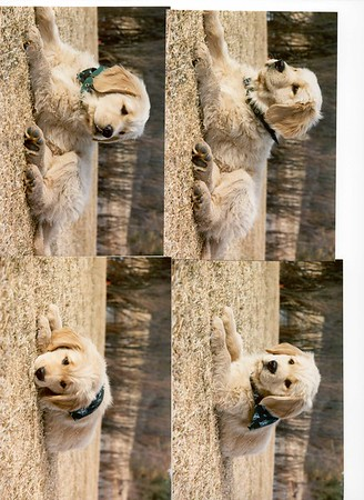 A Celebration of Boddington - Best dog in the Universe!