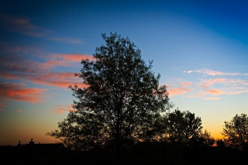 Sunrise over my neighbors yard