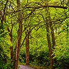 The walking path in Bridlewood Downs, Olathe, KS