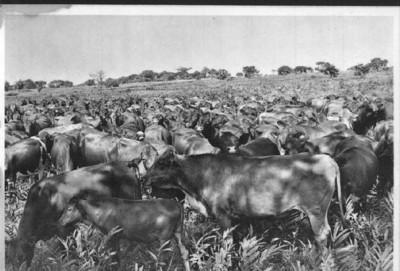 1961  - Actividade agro-pecuaria