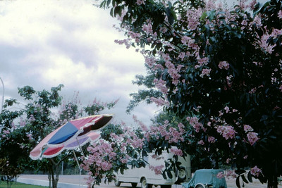 Sacavula, 1973