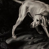 """The Fitchburg Art Museum will hold an opening reception for """"A Curious Nature: Paintings by Shelley Reid"""" on Sunday, February 12th from 1-3 p.m. SENTINEL & ENTERPRISE / Ashley Green"""