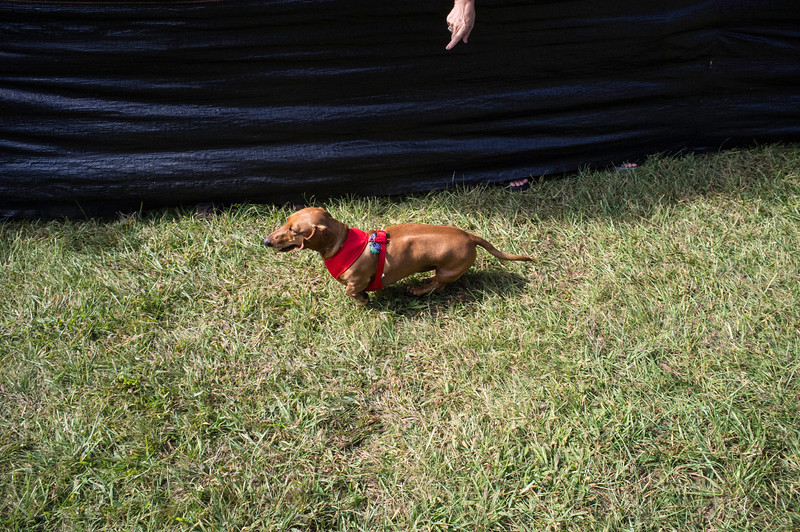 092212_Cape_Cod_Doxie_Day0236