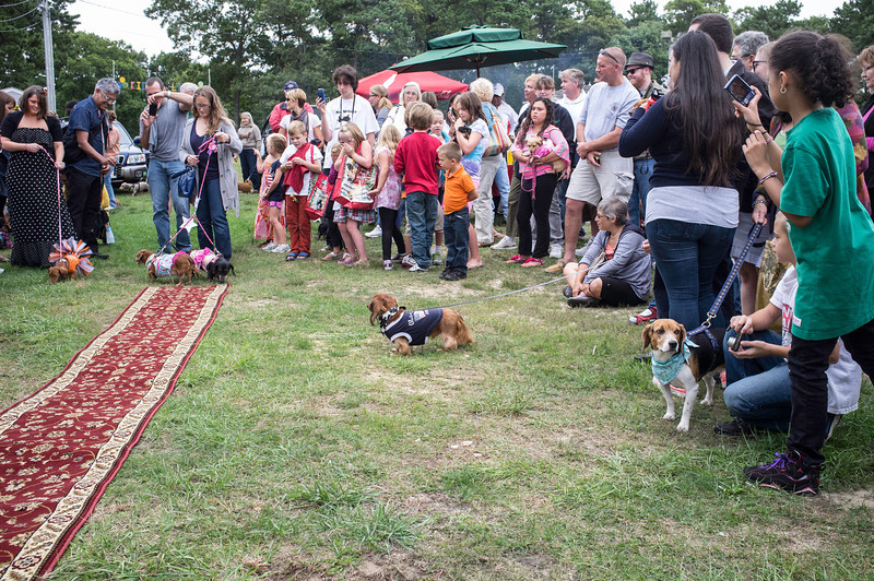 092212_Cape_Cod_Doxie_Day0193