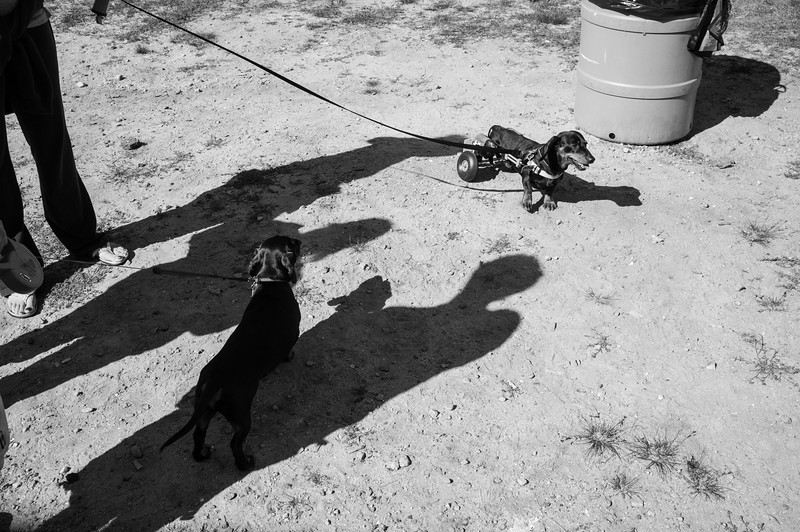 092212_Cape_Cod_Doxie_Day0249