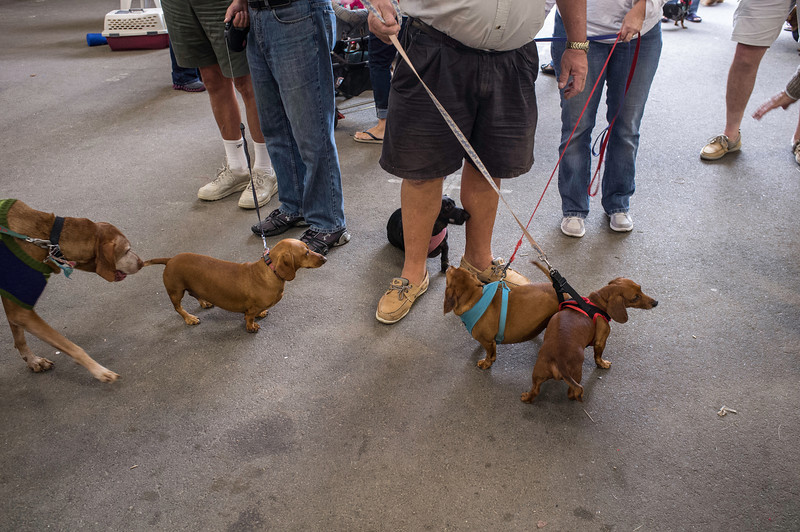 092212_Cape_Cod_Doxie_Day0171
