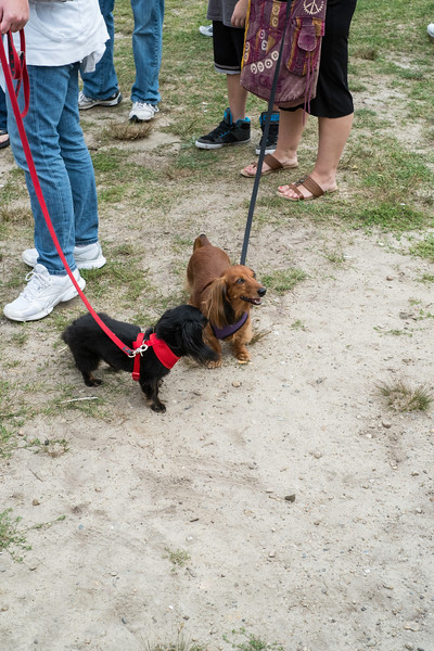 092212_Cape_Cod_Doxie_Day0006