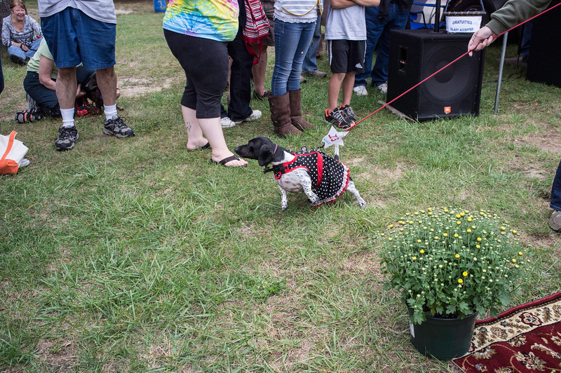 092212_Cape_Cod_Doxie_Day0190