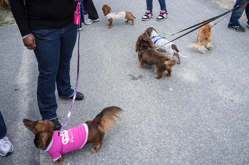 092212_Cape_Cod_Doxie_Day0163