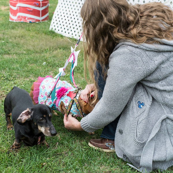 092212_Cape_Cod_Doxie_Day0041
