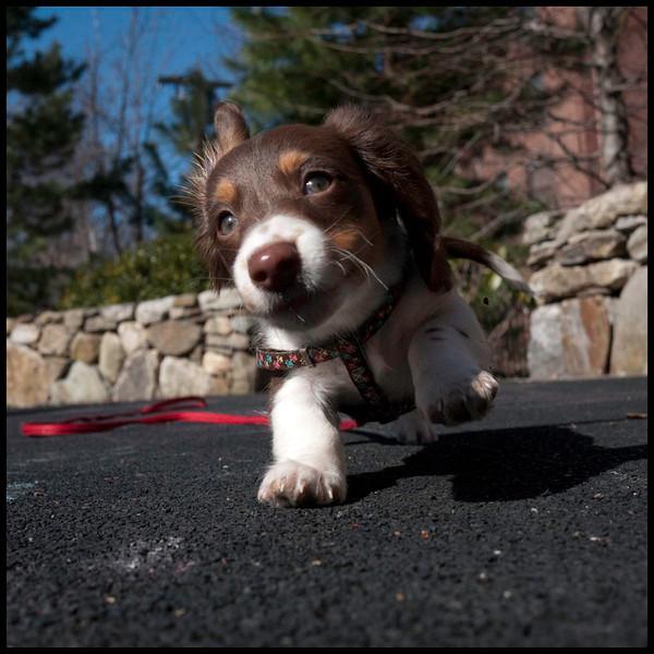puppies_032011 0024sm